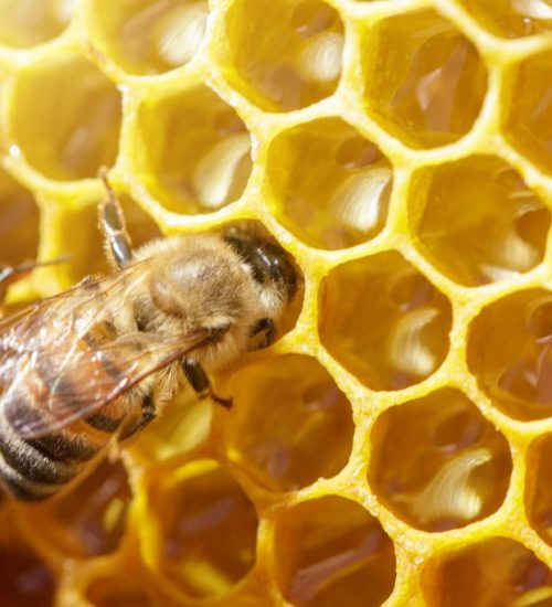 beautiful bees on honeycombs with honey close-up