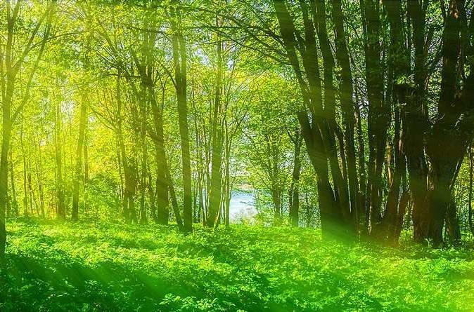 Waldbaden, es ist erheblich mehr als nur Spazierengehen