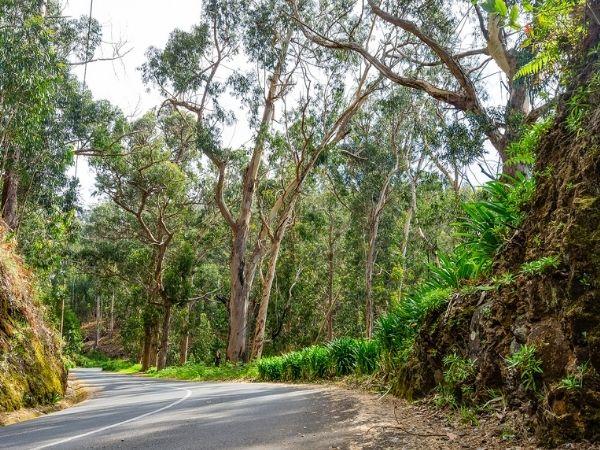 Eukyluptushonig wird auch in Portugal erzeugt