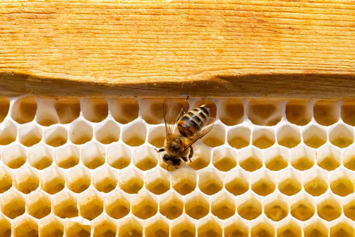 Bienenwachs – ein wertvolles Naturprodukt